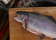 Trout on cutting board